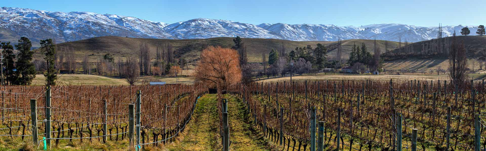 Central Otago Vineyards
