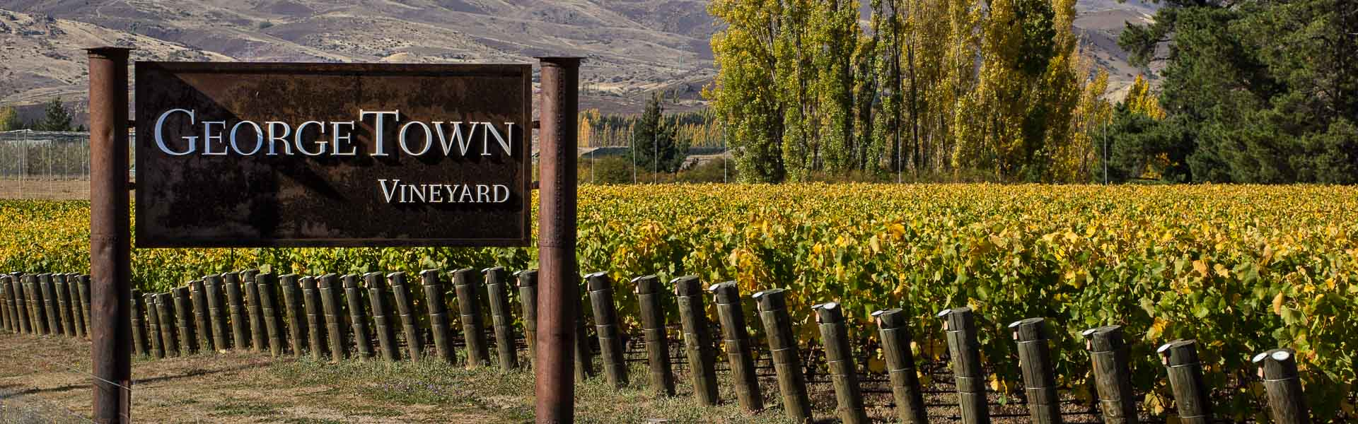 Arriving at Georgetown vineyard, Central Otago