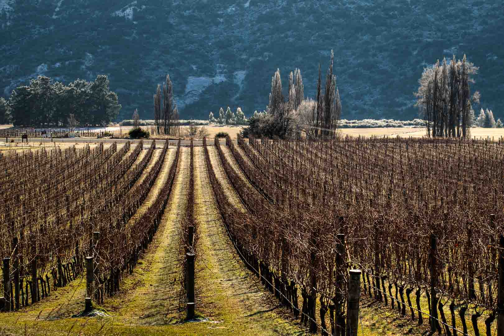 Valli Vineyards, Gibbston, Central Otago, New Zealand