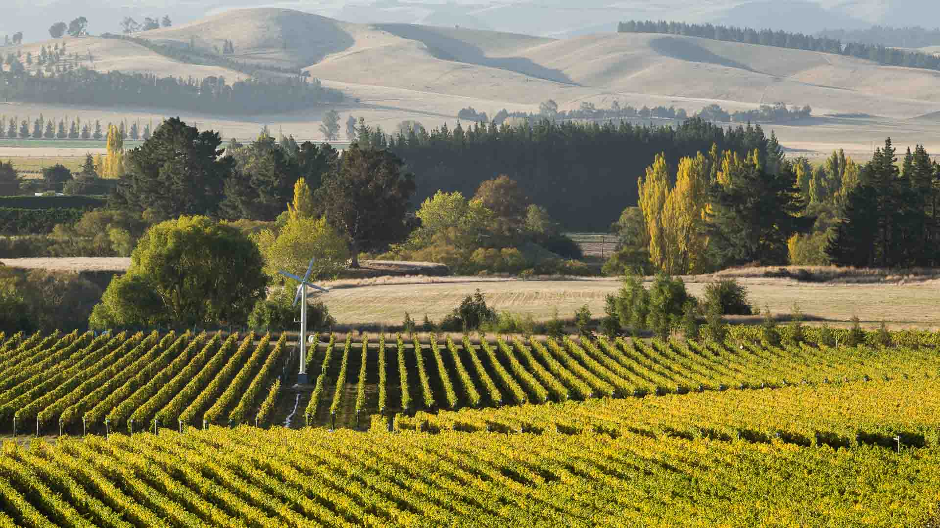 Waipara-Wine-Christchurch-New-Zealand